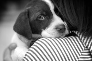 reasons to hug your dog main x 670 440x  300x200 - Formar Parte