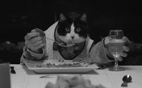 242AF0D500000578 2880653 image a 15 1419012084390 - Las necesidades nutricionales de tu gato