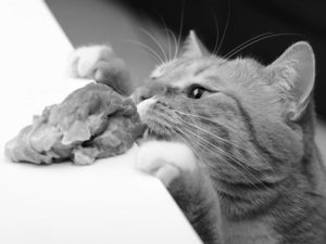 Can Cats Eat Raw Meat 2 300x225 - Nuestro Blog: biblioteca virtual