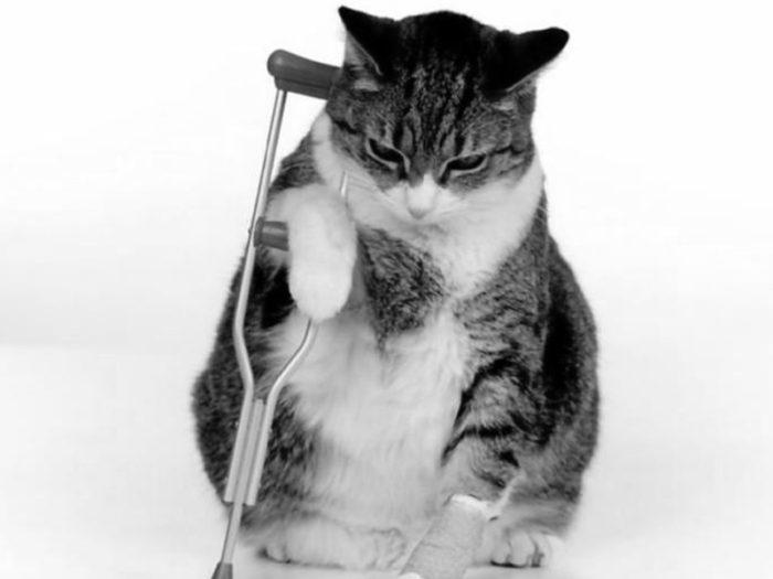 Gato fracturado 830x622 700x525 - Displasia de cadera en gatos