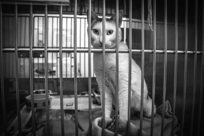 5057644 orig 700x466 - Denunciar Maltrato Animal en Costa Rica