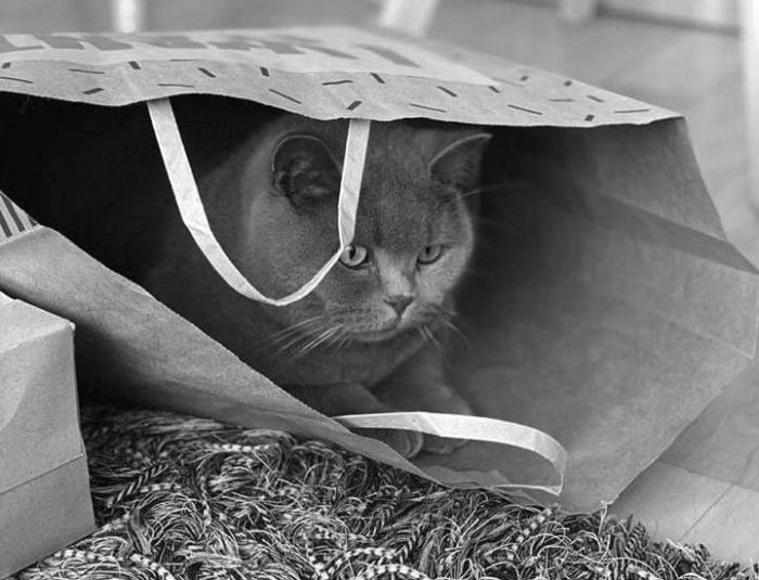 0201000011 1 700x535 - Los Gatos en Lugares Pequeños