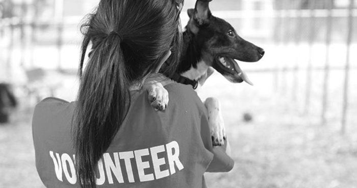 3qjqwl 700x368 - Oportunidades para voluntarios