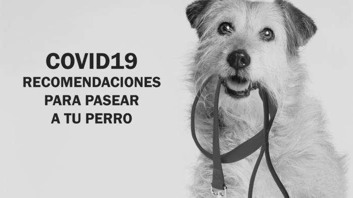 53806370 2331210340483601 2273407059712016384 o 700x394 - COVID19: Recomendaciones Para Pasear a tu Perro