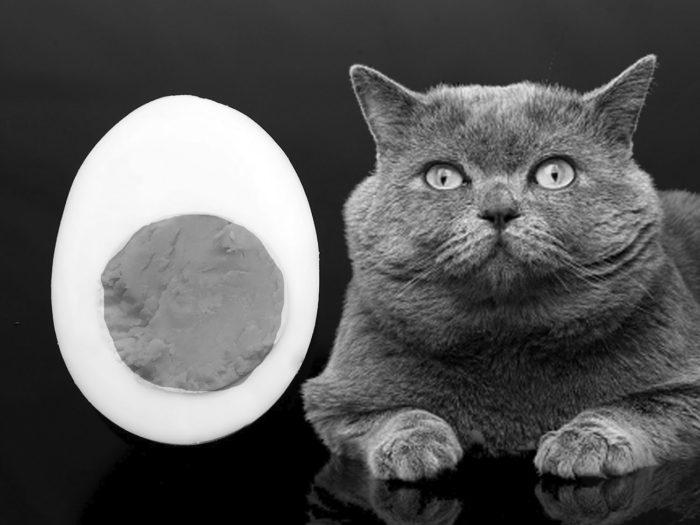 5a0af9e3581fb 1 700x525 - Mi Gato Puede Comer Huevo?