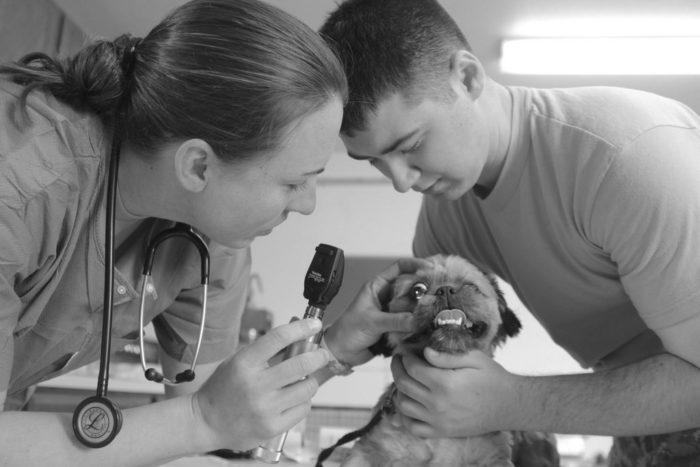 2000x2000.9 700x467 - ¿Por qué implementar pruebas genéticas en la práctica veterinaria?