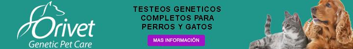 56418282 2346392412298727 5487529437488480256 o - Síndrome de Williams-Beuren y Perros